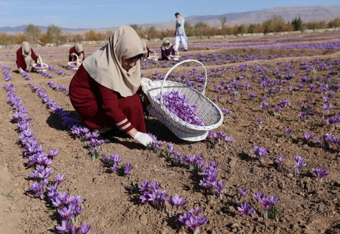 http://trinixy.ru/pics5/20161212/life_in_afghanistan_07.jpg