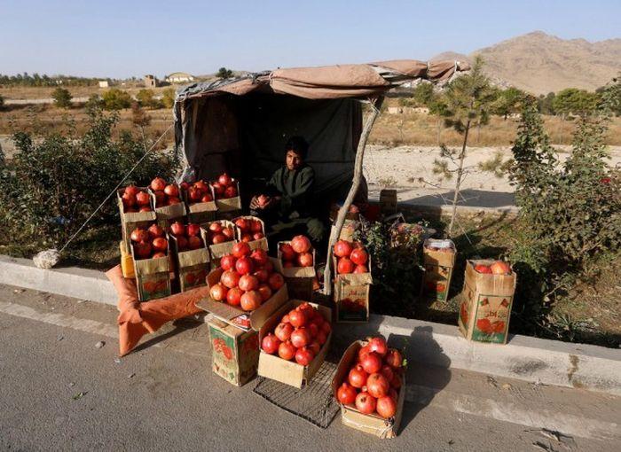 http://trinixy.ru/pics5/20161212/life_in_afghanistan_16.jpg
