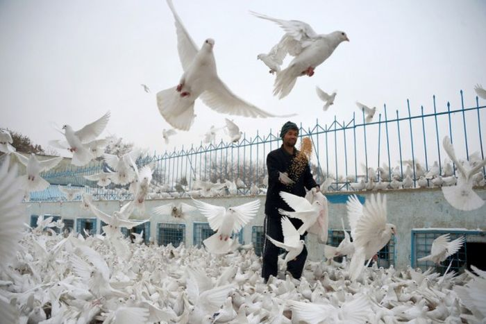 http://trinixy.ru/pics5/20161212/life_in_afghanistan_23.jpg