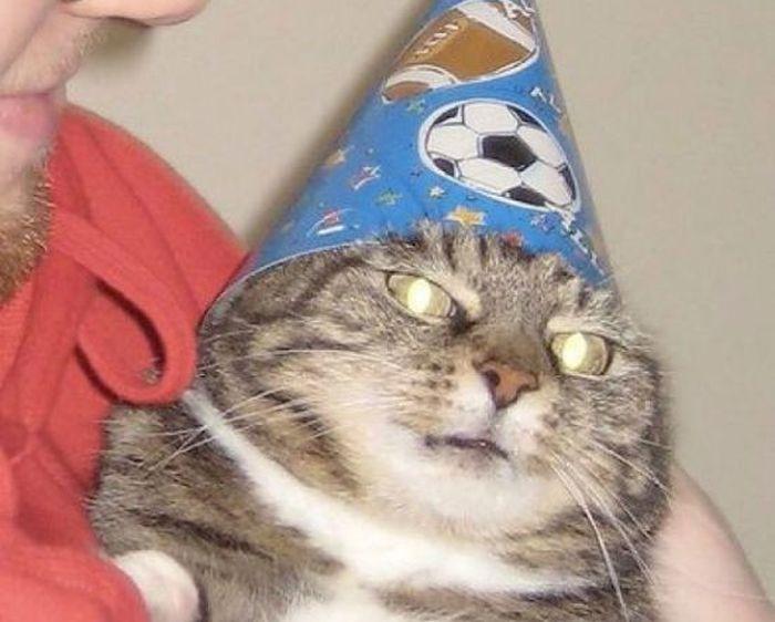 Кот-волшебник стал мемом «Вжух» (11 картинок)