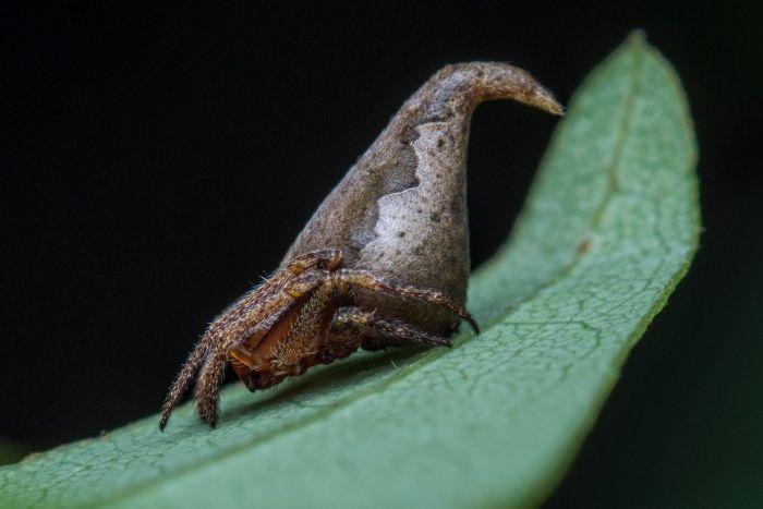 Новый вид пауков назвали в честь Распределяющей шляпы из «Гарри Поттера» (3 фото)