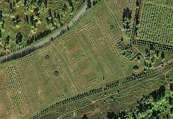 Яблоневый сад в форме имени «Петр», высаженный по инициативе бывшего мэра Красноярска (3 фото)