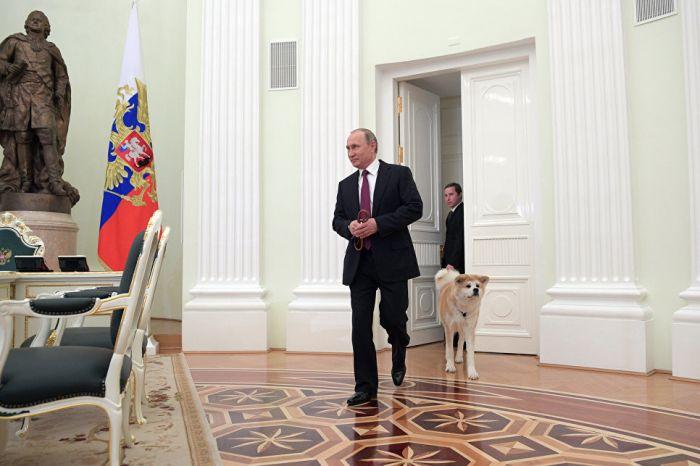 Путин показал японским журналистам подаренную ему собаку по кличке Юмэ (3 фото)