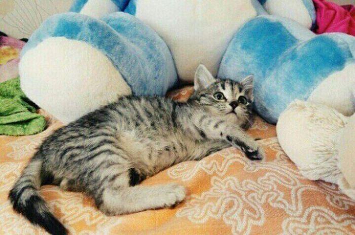 Спасение замерзшего котенка (фото + видео)