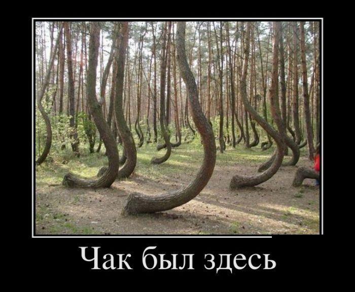http://trinixy.ru/pics5/20161215/demotivatory_30.jpg