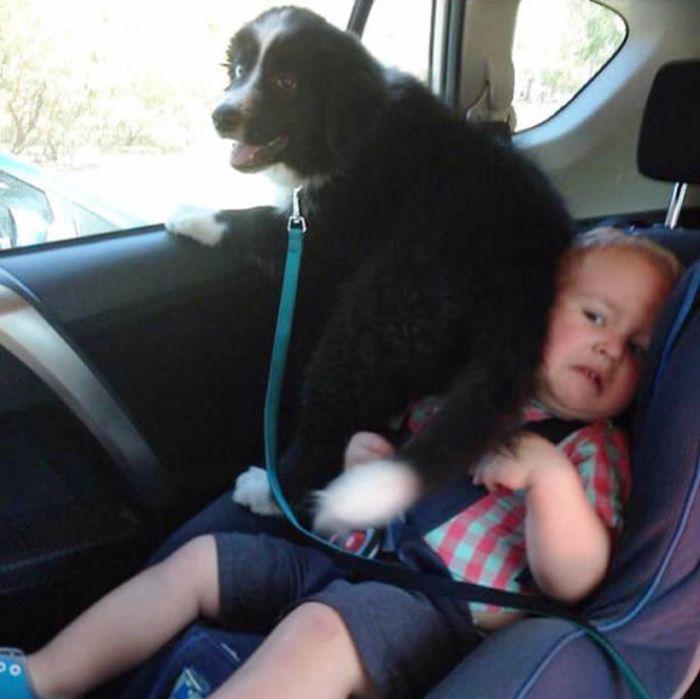 Собаки, которым плевать на личное пространство других (24 фото)