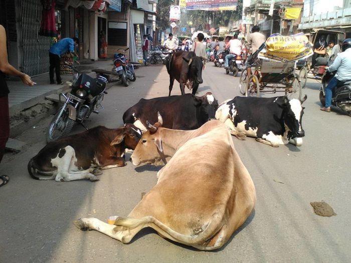 Варанаси - священный город-крематорий в Индии (28 фото)
