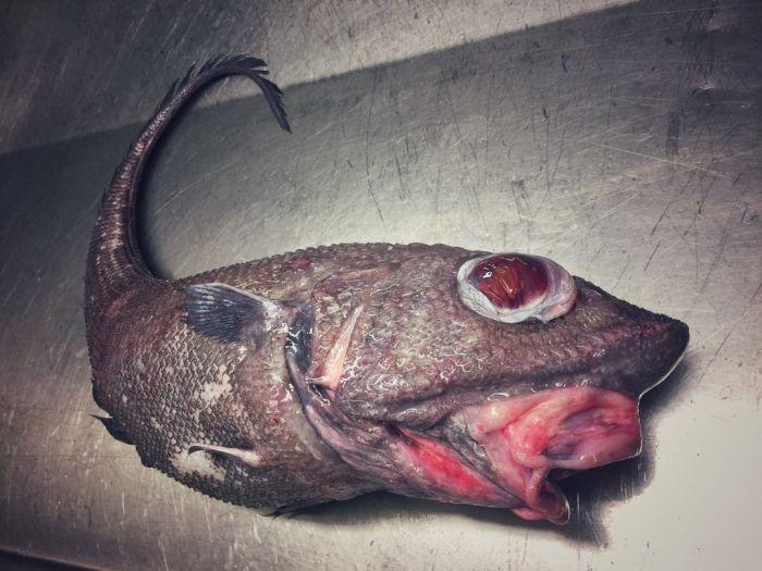 Мурманский моряк публикует фото странных глубоководных рыб, попавших в сети (21 фото)