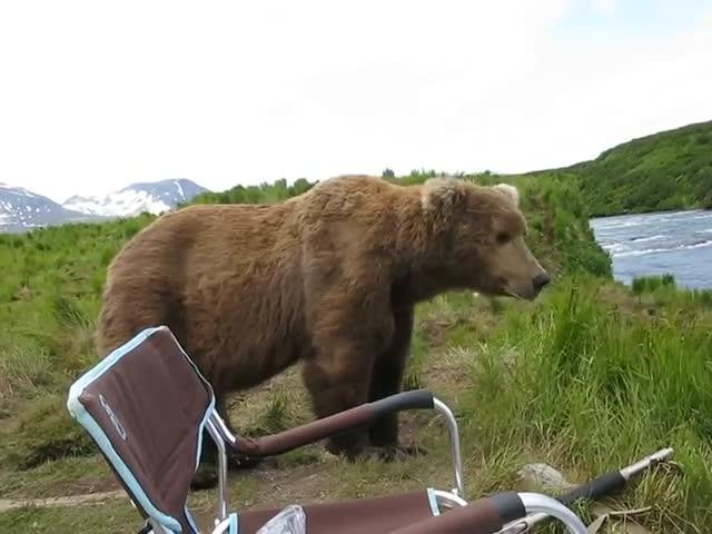 Медведь составил компанию фотографу
