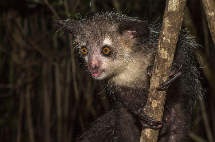 Egzotik hayvanlar (38 fotoğraf)
