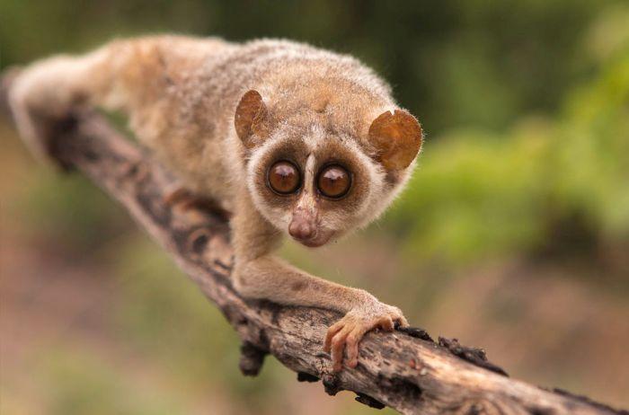 экзотические животные фото и названия