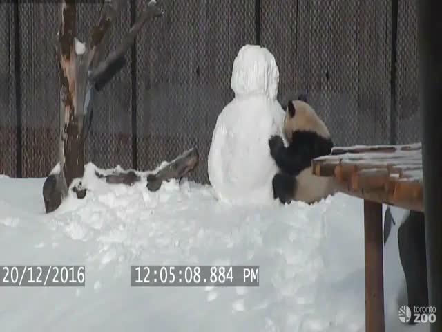 Борьба панды со снеговиком
