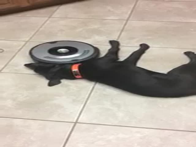 Ленивый пес и пылесос