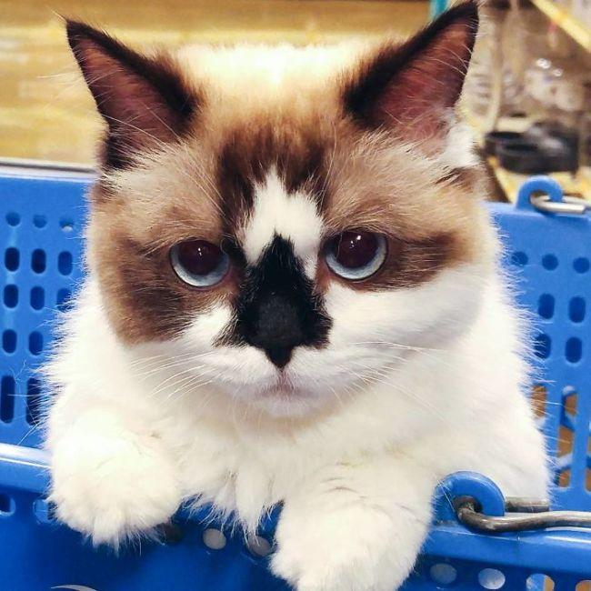 Кот по кличке Альберт - еще одна звезда соцсетей (12 фото)
