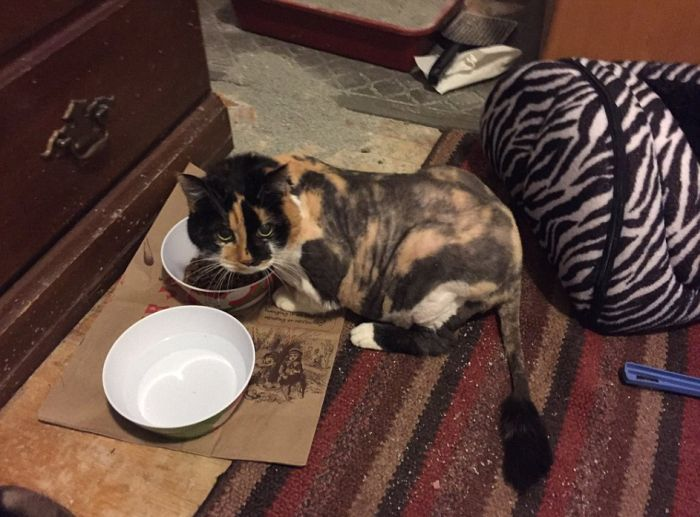 Кота спасли от лишней шерсти (6 фото)