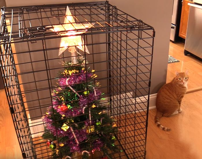 People Who Found A Way To Protect Their Christmas Trees From Animals (35 pics)