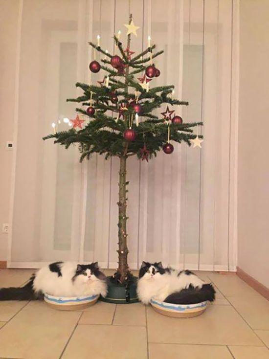 Как обезопасить елку от домашних животных (35 фото)