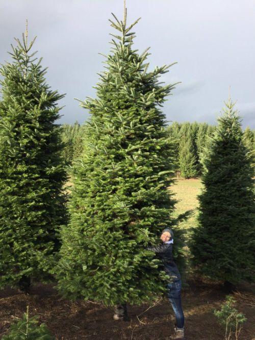 Необычная рождественская елка (2 фото)
