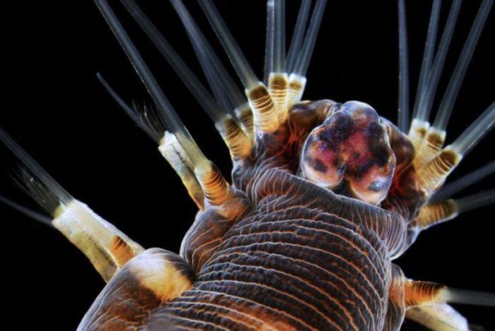 Mikroskop Altında İlginç Görüntüler (34 fotoğraf)