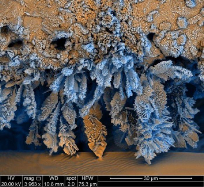 Интересное под микроскопом (37 фото)