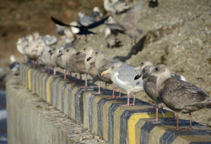 Повседневная жизнь жителей острова Шикотан (27 фото)