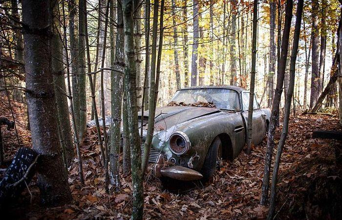Aston Martin DB4, простоявший 40 лет в лесу, продадут за полмиллиона долларов (8 фото)