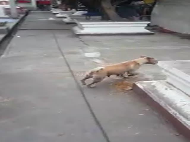 Собака не стала есть угощение