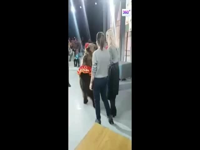 Медведица набросилась на девушку на съемках телепередачи «Про любовь»
