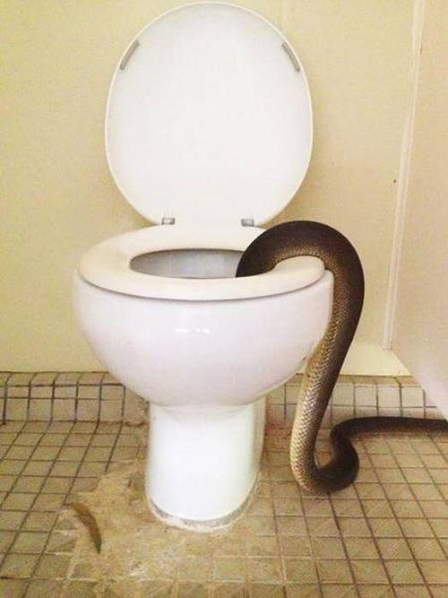 Типичное предупреждение в общественном туалете Австралии (4 фото)