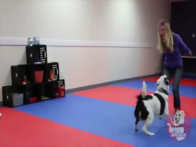 Отличный танец девушки с собакой