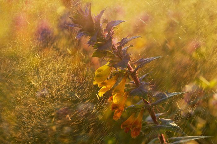 Победители фотоконкурса «Дикая природа России-2016» журнала National Geographic (14 фото)