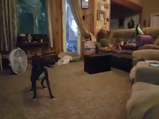 Непоседливый пес знает, как развеселить детей