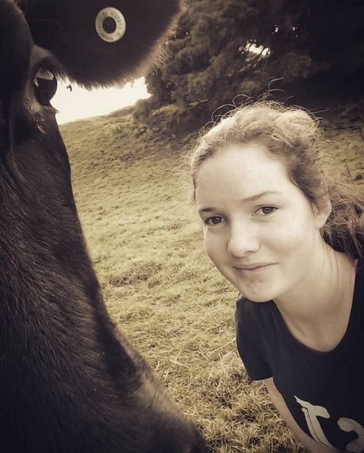 В Новой Зеландии девочка превратила корову в лошадь (7 фото)