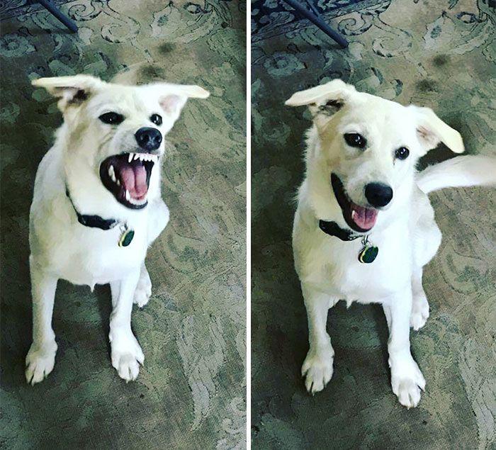 Животные, когда слышат похвалу в свой адрес (27 фото)