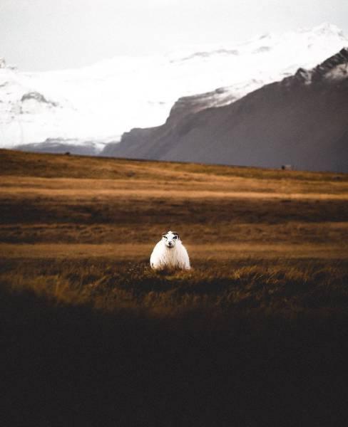 Потрясающая природа Исландии (76 фото)