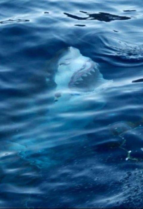 Жуткие морские фото (18 фото)