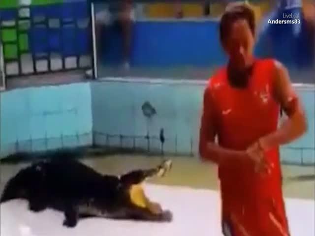 Крокодил схватил дрессировщика за руку
