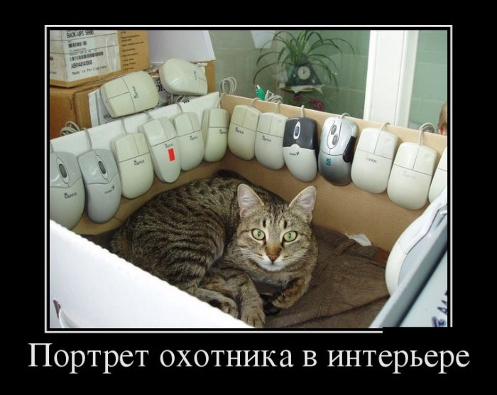 http://trinixy.ru/pics5/20170105/demotivatory_11.jpg
