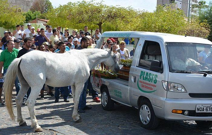 Картинки по запросу лошадь прощается со своим хозяином (5 фото)