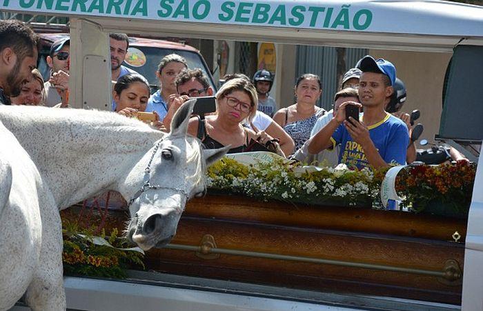 Душераздирающее фото: лошадь прощается со своим хозяином (5 фото)