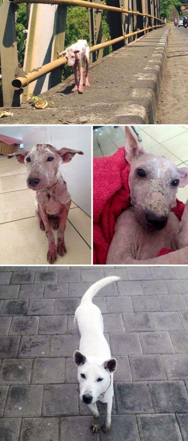 Собаки до и после спасения (20 фото)