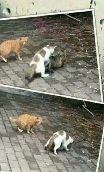 Трогательная история любви из животного мира (4 фото)