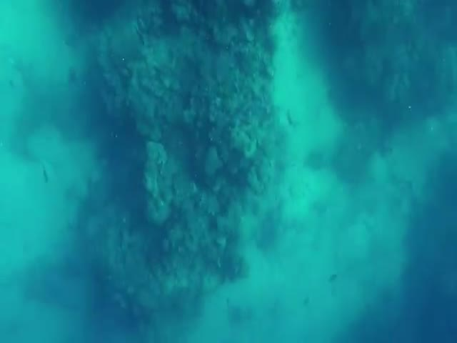 Дайвер отбился от тупорылой акулы