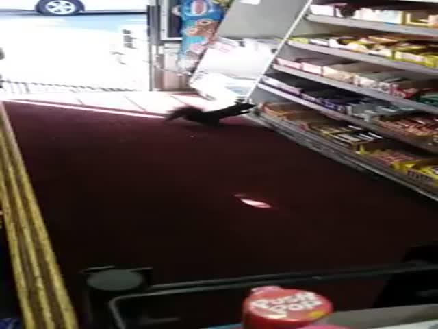 Белка украла товар с прилавка магазина