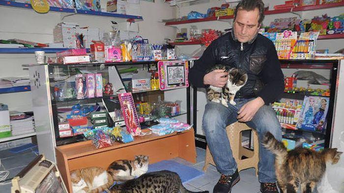 Картинки по запросу Как жители Стамбула помогали бездомным животным во время похолоданий