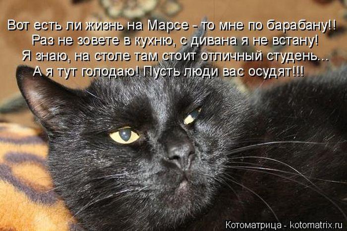 Лучшие котоматрицы недели (30 фото)