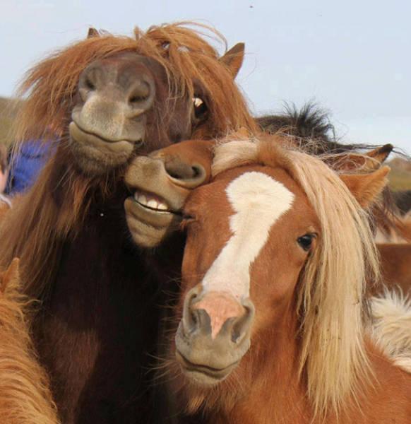Животные тоже любят селфи (48 фото)