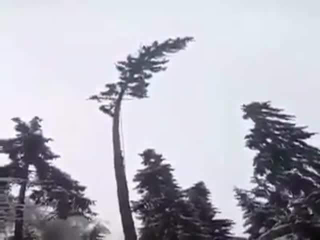 Как не стоит пилить деревья