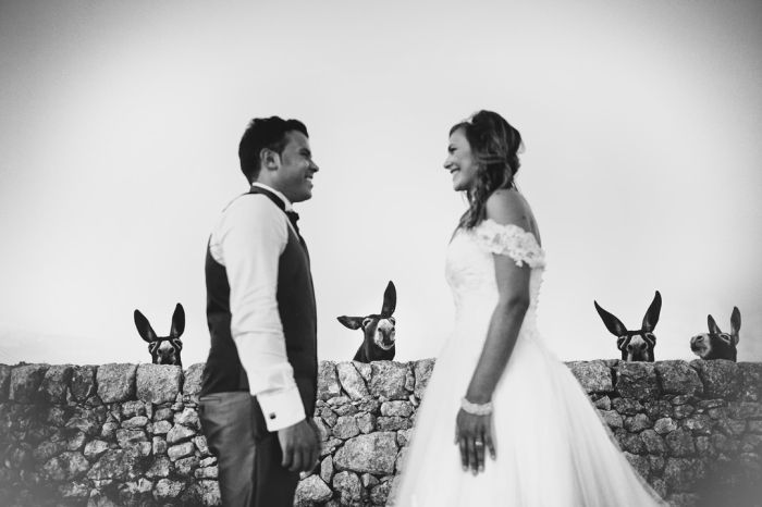 Лучшие свадебные фото 2016 года (50 фото)