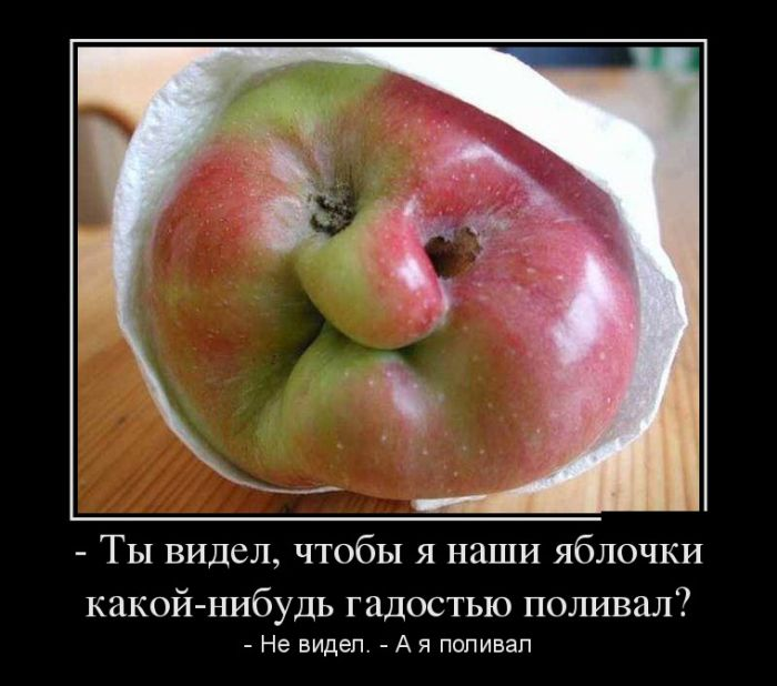 http://trinixy.ru/pics5/20170119/demotivatory_15.jpg